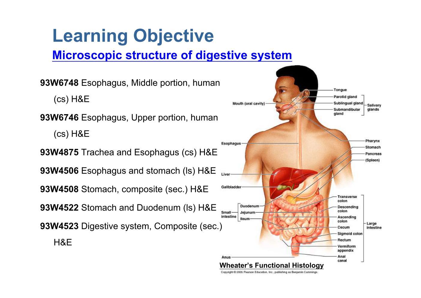 Block10-1/Learning Objective
