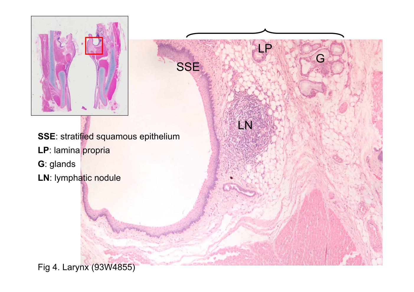 Anatomy histology slides